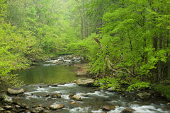 Stream in forest,spring Royalty Free Stock Image