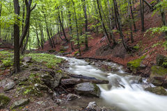 A stream in the forest. Spring day in a forest in Mehedinti, Romania Stock Photo