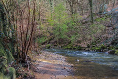 Stream through forest Royalty Free Stock Image