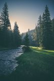 Stream in forest at sunset Royalty Free Stock Images