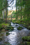 Stream in a forest Royalty Free Stock Photo