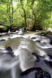 Stream in the forest during the tropical forest Royalty Free Stock Images