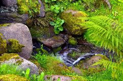 Stream in the forest Royalty Free Stock Photos