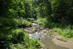 Stream in the forest on a warm sunny day. Stream in the forest, fantastic beauty of nature, beautiful landscape, sunny warm summer day, trees with dense foliage stock image