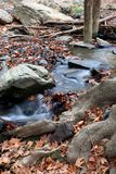 Stream in forest. Water flowing in river vertical. royalty free stock photo