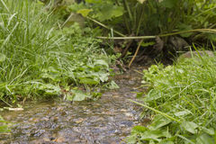Stream in forrest Stock Photo
