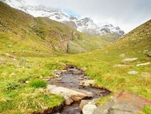 Stream in fresh green Alps meadow, snowy peaks of Alps in background. Royalty Free Stock Image
