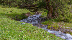 Stream. A stream with fresh spring water running under the tree in the mountains Royalty Free Stock Photography
