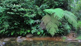 A stream full of red algea and a clear river in the jungle with huge colourful ferns stock footage