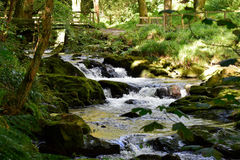Stream. In a glen on the Isle of Man Royalty Free Stock Images