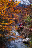 Stream in golden fall forest Stock Image
