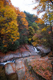 Stream in golden fall forest Stock Photo