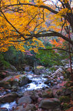 Stream and golden fall forest Royalty Free Stock Photography