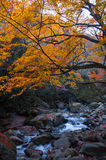 Stream and golden fall forest Royalty Free Stock Photos