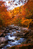 Stream in golden fall forest Royalty Free Stock Photography