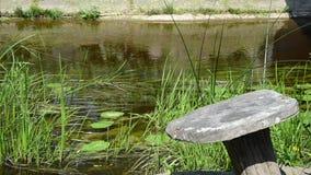 Stream grass leaf stock video