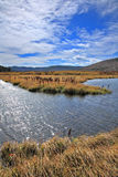 The stream and grass in Yellowstone in the USA Royalty Free Stock Image