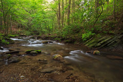 Stream , the Great Smoky Mountains National Park Royalty Free Stock Photo