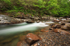 Stream , the Great Smoky Mountains National Park. Greenbrier little pigeon river, streaming river with spring greens Stock Photos