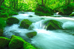 Stream in green forest Stock Photos