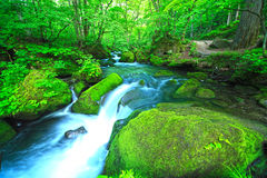 Stream in green forest Royalty Free Stock Photo