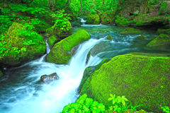 Stream in green forest Stock Images