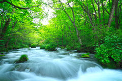 Stream in green forest Royalty Free Stock Images