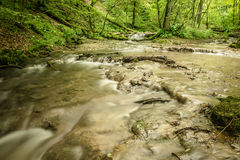 Stream in a green forest Royalty Free Stock Image