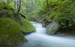 Stream in Green Forest Royalty Free Stock Photography