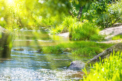Stream in the green forest Royalty Free Stock Photos