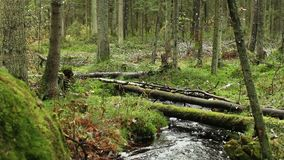 Stream in green forest stock video footage
