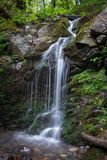 Creek in green forest with waterfall stock photos