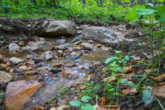 Stream in the green wood Royalty Free Stock Images