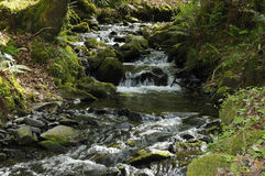 Stream in Hawk Combe Stock Photos