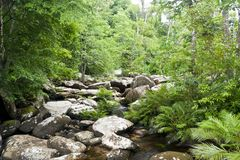 Stream in a heart of rain forest Stock Photography