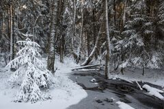 Free Stream In A Snowy Winter Dark Forest Royalty Free Stock Photos - 194130468