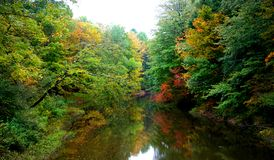 Free Stream In The Forest Stock Photo - 10974800
