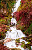 Stream with intense colors II royalty free stock image