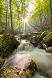 Stream in Jizera mountains, Czech Republic Royalty Free Stock Images