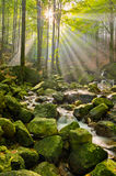 Stream in Jizera mountains, Czech Republic Stock Photography