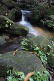 Stream in a jungle Royalty Free Stock Image