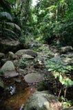 Stream in the jungle Stock Image