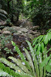 Stream in the jungle Royalty Free Stock Image