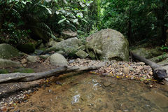 Stream in the jungle Royalty Free Stock Photos
