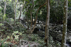 Stream in the jungle Stock Photography
