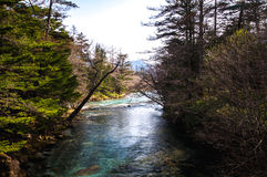 Stream at Kamikochi. Stream with forest in both sides in the centre at Kamikochi Royalty Free Stock Image