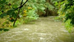 Stream with kayak stock footage