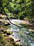 Stream at Khao Sok National Park, Thailand stock photos