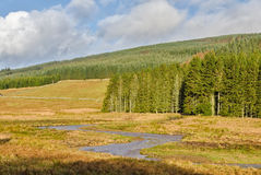 Stream in Kielder Forest Stock Images