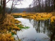 Stream in Kozienicki Park Krajobrazowy in Poland. Raised bog in Kozienice Landscape Park in Mazovia region in Poland. Photo taken during snowless January in the royalty free stock photos